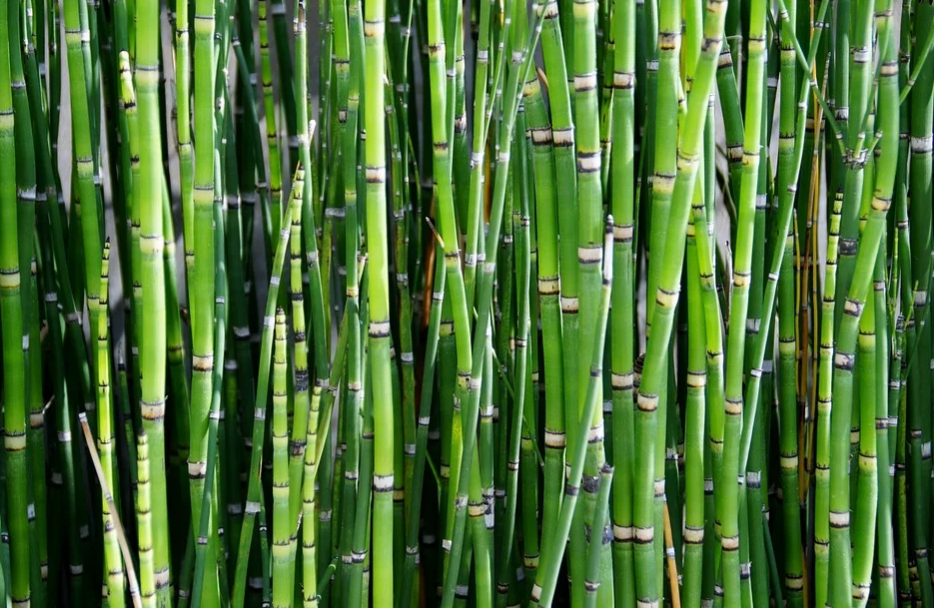 Dense bamboo plants showing that growing them can be one of the better rooftop garden design ideas