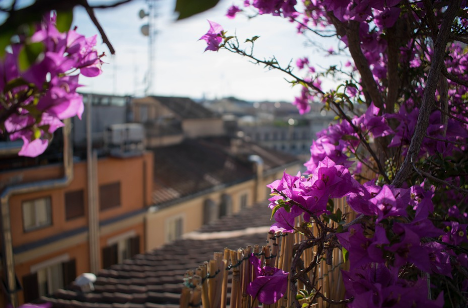 A view from a rooftop through some flowers